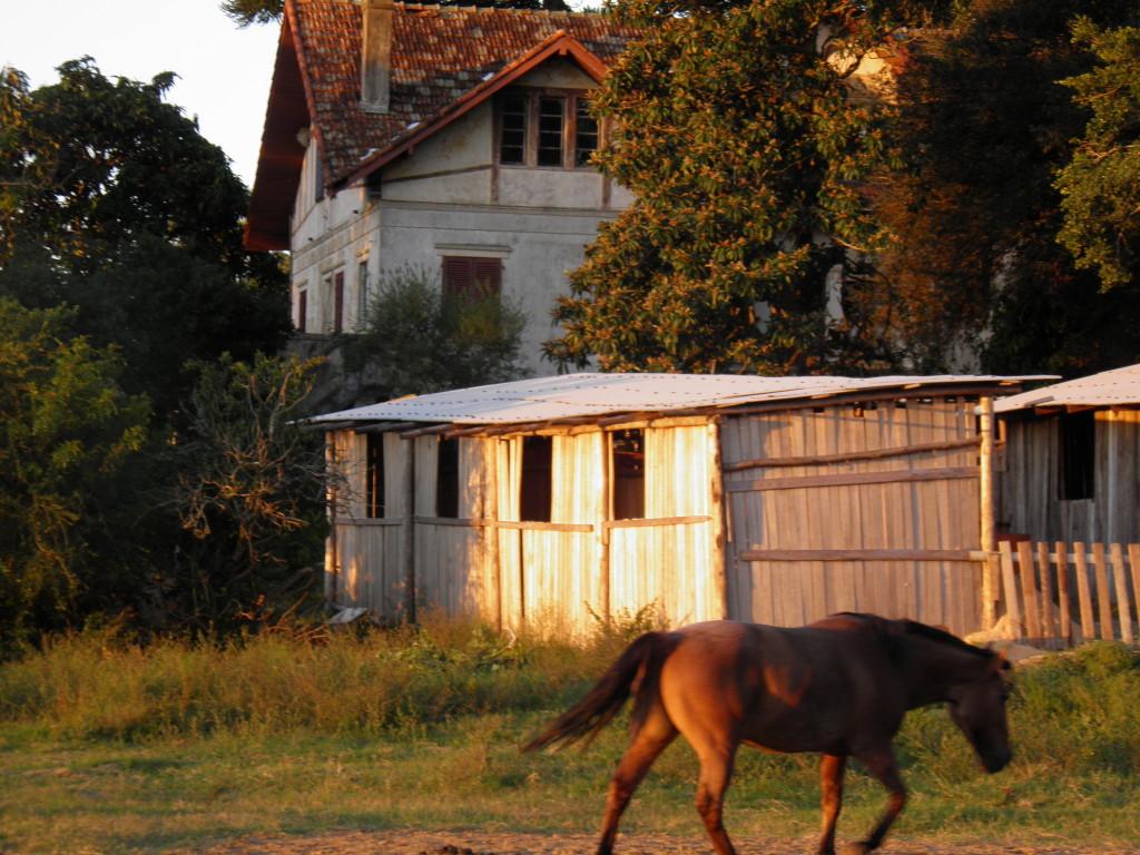 Escola de Equitação Manège Liberté