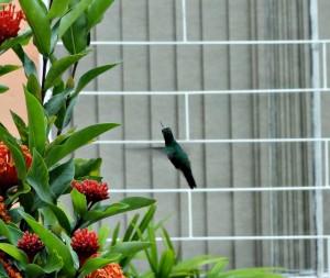 Beija-flor - foto de Eliane Cunha